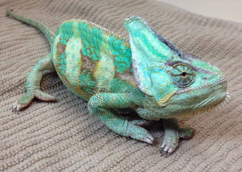 Exotic Pet Care in Verona